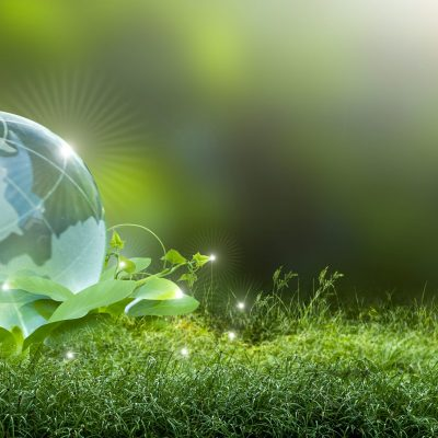 Renewable energy concept Earth Day or environment protection Hands protect forests that grow on the ground and help save the world.